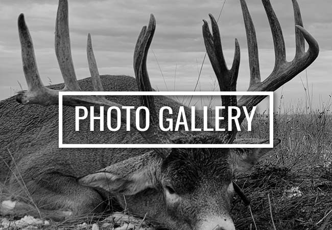 Alberta Dark Horn Ltd Photo Galleries